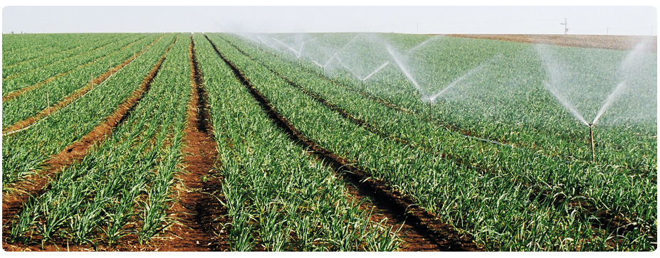 crops with irrigation